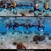 海が綺麗な珊瑚の森スノーケル