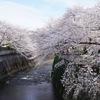 2019/04/05 一人花見  外濠(飯田橋~市ヶ谷)/神田川(東中野)/中野駅前