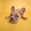 意外と知らない!面白い実用的な犬の雑学 2021年最新版【ざっくり解説】