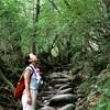 もののけ姫の舞台『白谷雲水峡』雨の日トレッキングに挑戦