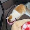2月14日(日) 猫のモカ療養中