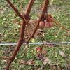 ワイン体験レポート「12月」 Vol.1