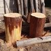檜の丸太椅子と樹種更新