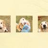 犬撮影のロケハン