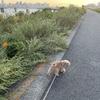 夕方の淀川散歩。