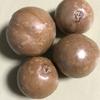 マカダミアナッツ、ウッドローズ、月桃の種まき