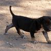 ミャンマーで ⑥ 自由な犬と、もともと自由な猫たち
