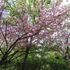 兵庫県西宮)北山緑化植物園。新緑&花盛り。八重桜、シャクナゲ、ミツバツツジ。センダイムシクイ、シジュウカラ、ヤマガラ、エナガ、シロハラ、ヒヨドリ。ハンミョウ。