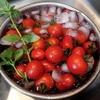 【ミニトマト栽培】カンタンで失敗が少ない!手間をかけずにずぼら栽培でミニトマトを育てる5つのコツ