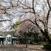 桜を見て優待利用いろいろ