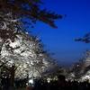 夜桜を見に行く 『万博記念公園桜まつり』 ~両親も誘って夜桜と洒落込みました~