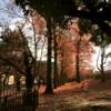 秋の動物園