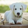 犬の躾の基本「ふせ」「まて」「こい」の教え方