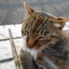 7月前半の #ねこ #cat #猫 その2