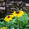 小屋の周りの花達の栄枯盛衰