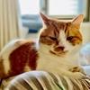 二度寝していたら、愛猫が飼い主の顔に乗って添い寝してくれました(息苦しいw)