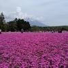 【山梨】激混みの「富士芝桜まつり」に行くには自転車がベスト!