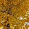 落葉樹の成果