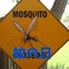 【夏の虫】蚊の日って、、、