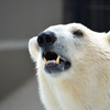 山や森以外でも注意!多発しているクマ被害