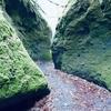 【スポット】北海道の秘境・苔の回廊を往く〜楓沢ー風不死岳ルート・その2 苔の回廊編