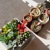 多肉植物を始めて育ててみたいと思ったら読んでほしい。我が家の多肉植物は少しずつ育っています。