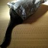 猫あるある。&小説更新♪