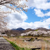 桜と標高差
