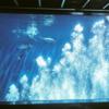遊覧船ルートがベスト!「箱根水族館」へ観光に行きました