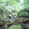 林道釣りング