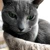 ミニマリストに憧れる。突然入ったスイッチ!飼い主の場合と猫さんの場合。
