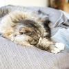 ネコの腎性貧血って良くなるの?