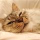 3匹目の猫をお迎えしました⑧~2週間目~