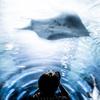水族館撮影をちょっと豊かにする6つの提案