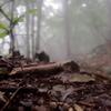森の中の化け物。