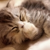 【マンガ】猫好きにおすすめの最高に面白い猫漫画を紹介する