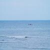 🦜野鳥の回【178】海だ野鳥だ初見ラッシユだ!一挙4種をゲッチュ