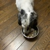 犬猫の栄養バランス