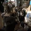 テレメンタリー2021「多頭飼育崩壊 ~いまそこに迫る危機~」を見て思ったこと