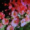 1月4日花と花言葉・歌句