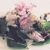 葉桜盆栽日記:花がら摘みと花がらコラージュ遊びとマクロ