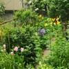 固定観念フリーのお庭