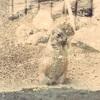 2歳の息子と王子動物園に行ってきた話