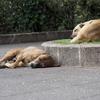 グアテマラ人は犬が大好き。たとえそれが野良犬でも