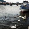 カレル橋660周年記念、モルダウ川は遊泳禁止