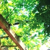 オススメの公園*ネーブルパークに潜入(ㆁᴗㆁ✿)