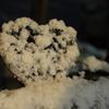 2月4日(火)曇りのち雪 立春