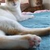 ネコ社会を学ぶ仔猫