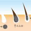 薄毛・ハゲは一日にして成らず~ハゲと遺伝の因果関係とは