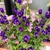 紫色の花が目立ってきた^ ^